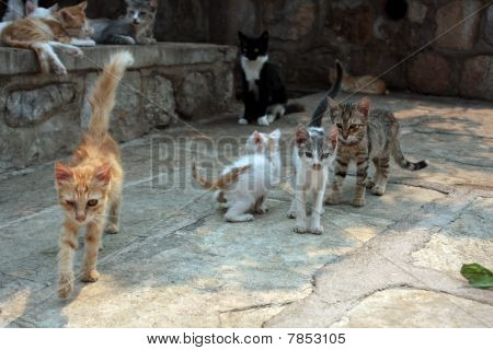 the young cats