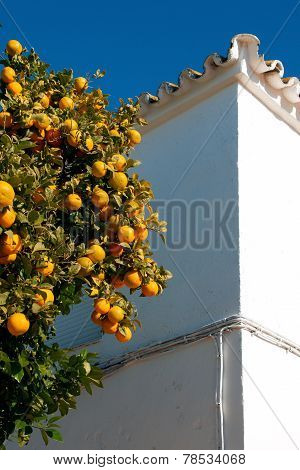 Orange And White Walls