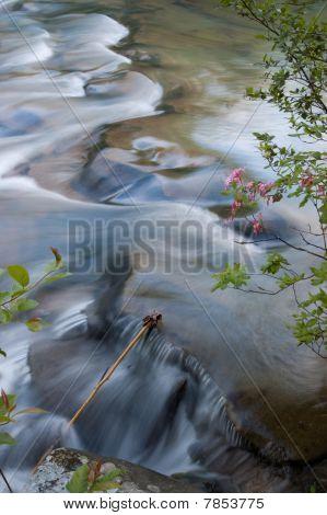 Kings River Flow