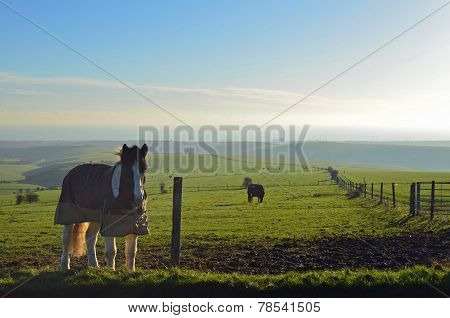 Horse's on the Sussex Southdown's.