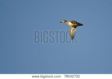 Female Green-winged Teal Flying In A Blue Sky