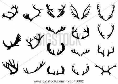 Collection of deer horns