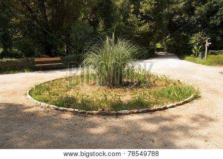 Pampas Grass On Flowerbed Photo Of Central Park In Athens, Greece