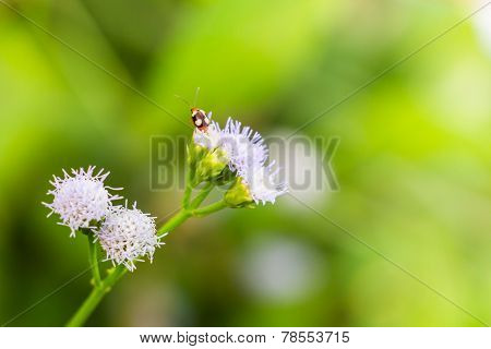 Bug Swarm Flower