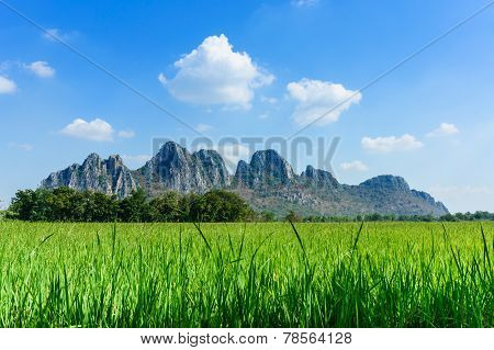 Rice Field Among Mountain On Central Of Thailand