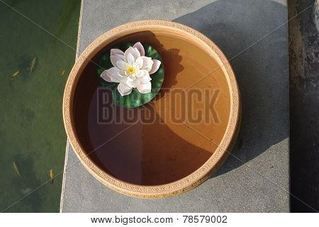 lotus floating in water clay pot at spa. with fish background