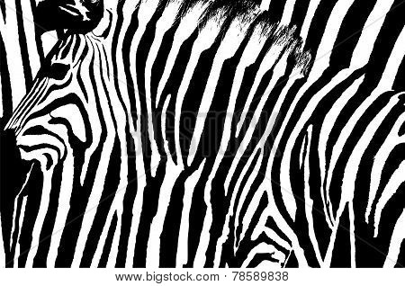 Graphic Abstract Design Of A Zebra With Its Stripes Blended As The Background.
