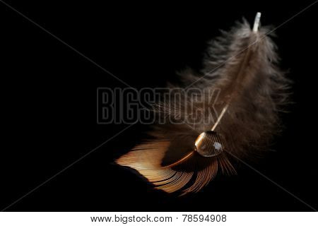Beautiful feather with water drop on black background