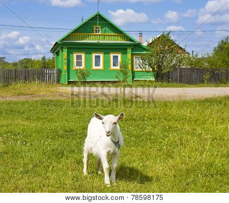 Little Goat And Village House