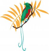 picture of bird paradise  - Bird of paradise vector illustration travel design icon - JPG