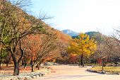 pic of seoraksan  - colorful trees in autumn and blue sky at Seoraksan National Park ,South Korea