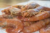 picture of crustaceans  - typical fresh crustaceans of the mediterranean sea - JPG
