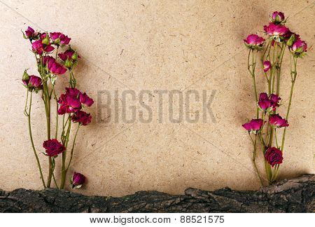 Dried roses with bark on plywood background