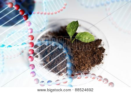 science, biology, ecology, research and green future - concept - close up of petri dish with plant and soil in bio laboratory over dna molecule structure