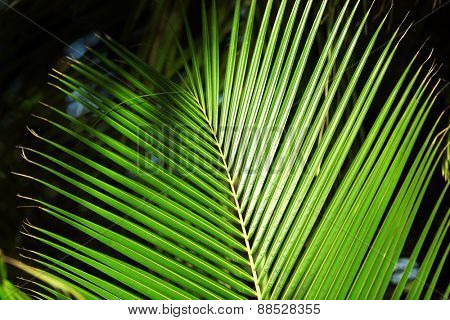 Exotic palm leaf, closeup