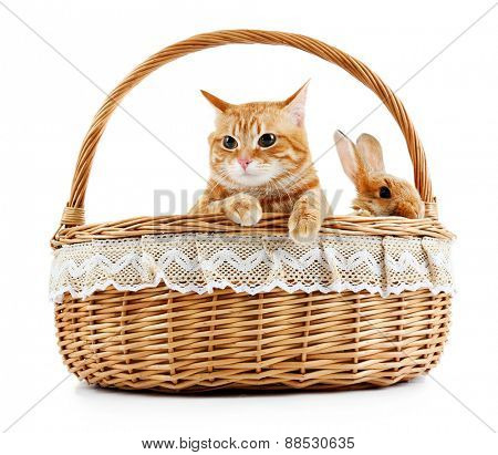 Red cat and rabbit in wicker basket isolated on white