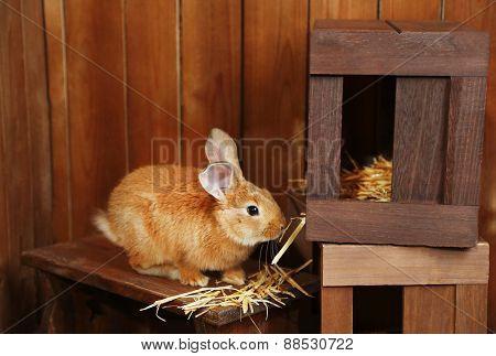 Cute rabbit in barn, close up