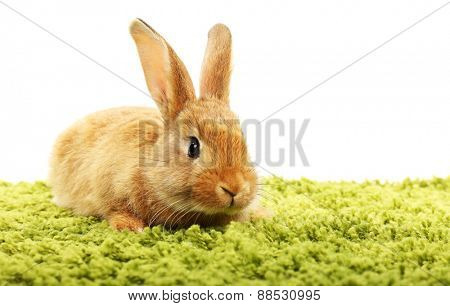 Cute brown rabbit on green grass isolated on white