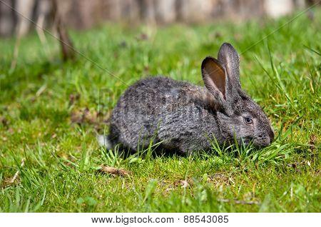 Little Rabbit