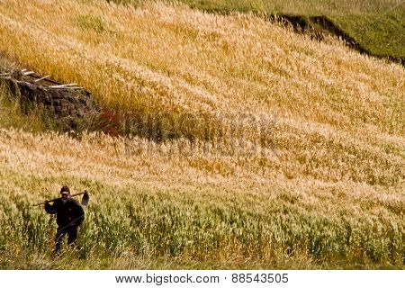 Unidentified indigenous farmer working in the andean highlands, Ecuador.
