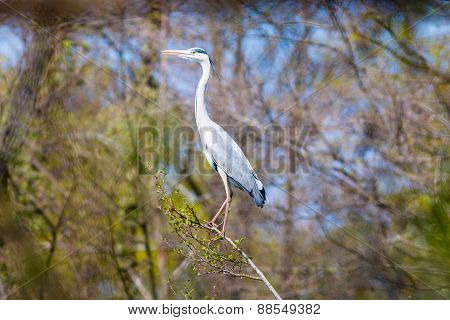 One Heron On A Tree Branch