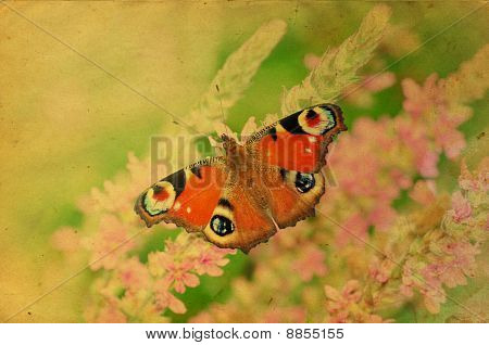 Grunge Retro Butterfly Greeting Card