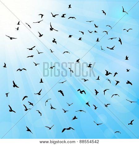 Birds, gulls, black silhouette on blue background. Vector