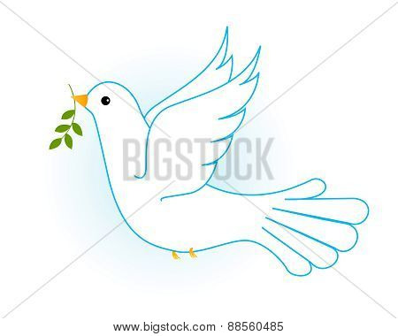 White Dove / Pigeon