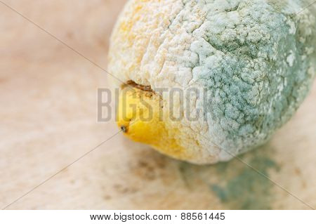 Moldy Organic Lemon On Wooden Background