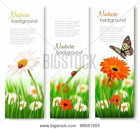 Summer nature banners with colorful flowers and butterfly. Vector.
