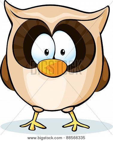 Cute Owl Vector - Isolated On White Background