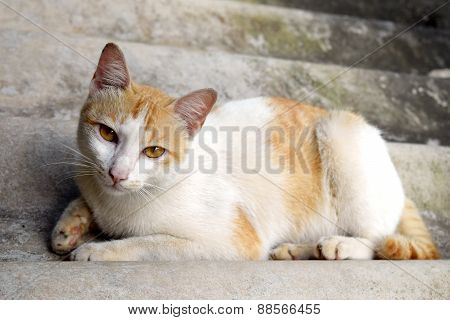 Portrait of Thai cat is Sleeping on the roof tile , Thailand.