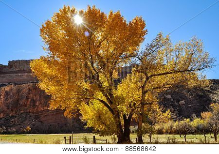 Tree In Capitol Reef National Park