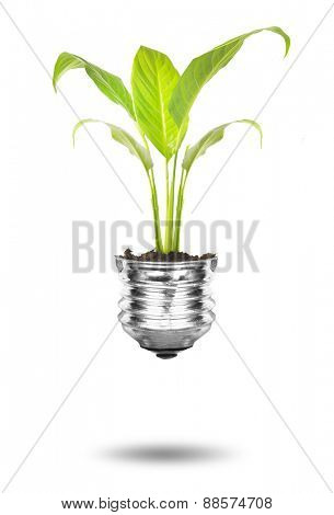 Green plant in lamp bulb on white background