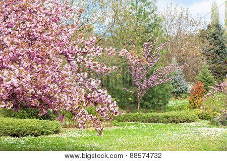 Park full of flowers