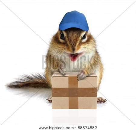 Comical Chipmunk Courier Hold Parcel, Delivery Concept