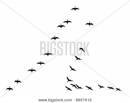 Geese Flying Drawing Vector Drawing Become Flying