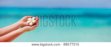 Panorama of a woman holding tropical white frangipani flowers over turquoise tropical ocean water