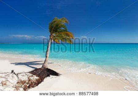 Perfect tropical white sand beach with coconut palm in Cuba