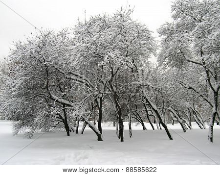 Trees covered with snow and ice in winter