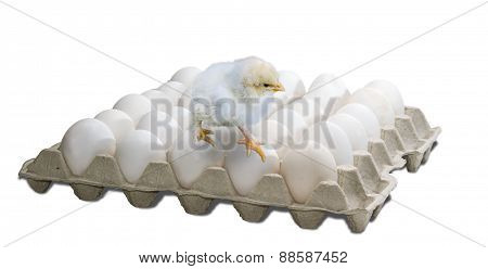 Tray With Eggs And Chick