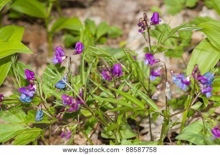 Blue & violet forest flowers