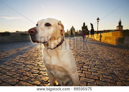 Dog At The Sunrise