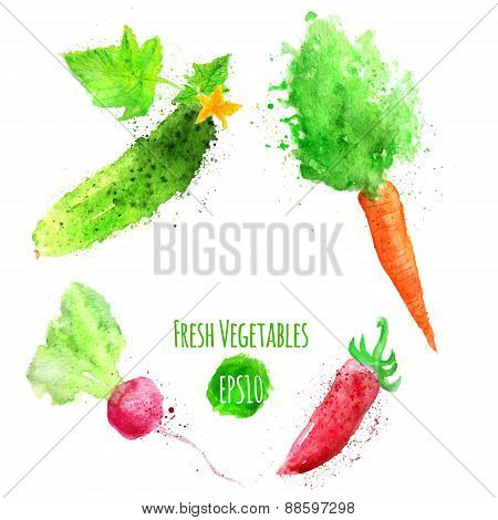 Vector set of watercolor colorful vegetables. Carrot, radish, cucumber, pepper. EPS10