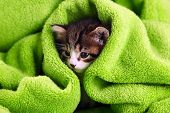 image of close-up shot  - Cute little kitten with towel - JPG