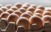 stock photo of trays  - Fragment of tray with light brown chicken eggs. View along the tray with blurred image on background.