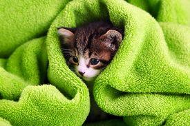 stock photo of cute animal face  - Cute little kitten with towel - JPG