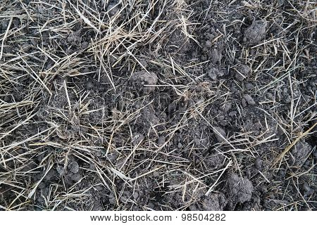Field (black earth) after harvest