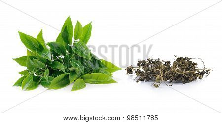 Green Tea Leaf And Dry Tea Isolated On White Background