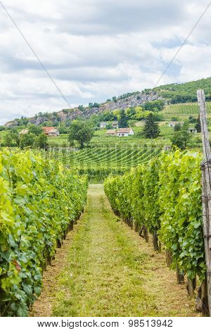Industrial Grape Production